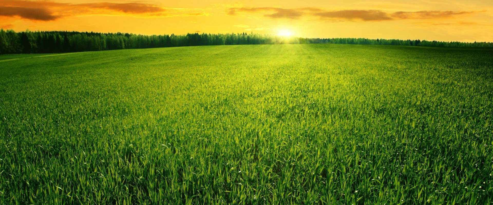 <p>  Promoting Innovative & Effective Technologies in Farming  <br></p>