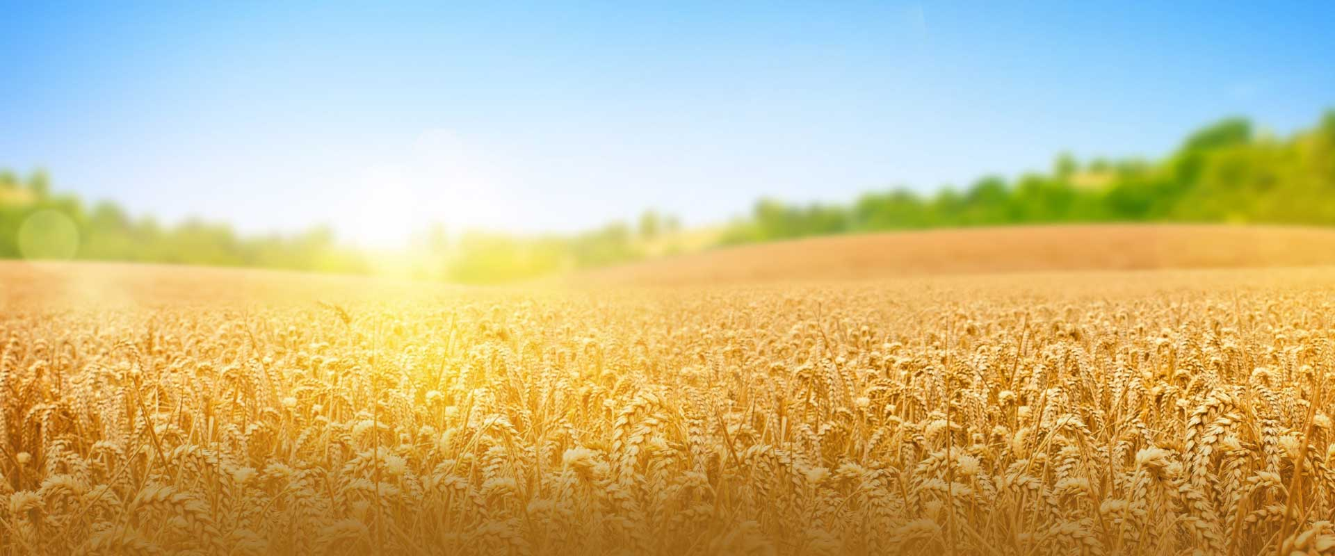 <p>Committed to Sustainable Agriculture<br></p>